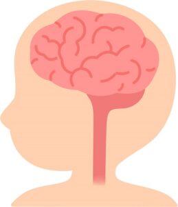 幼児の脳は、大人と完全に別次元で成長する驚異の事実